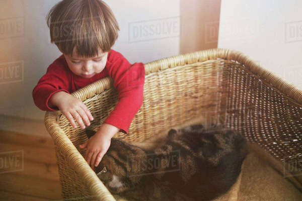 Boy petting cat in basket Royalty-free stock photo