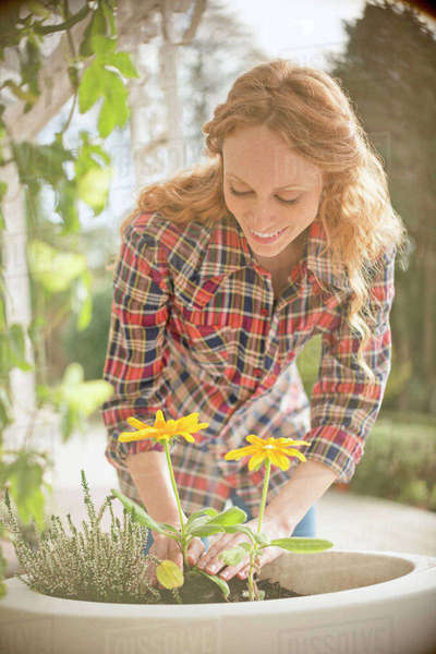 Woman planting flowers in flowerpot Royalty-free stock photo