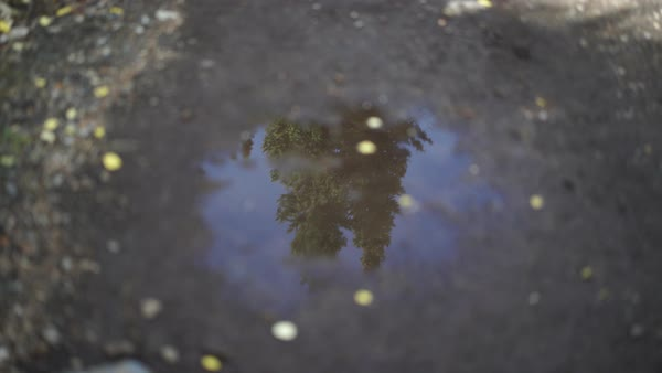 Reflection of trees in a pebble Royalty-free stock video