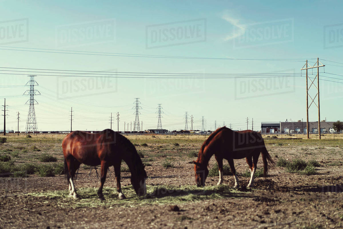 Horses on ranch Royalty-free stock photo