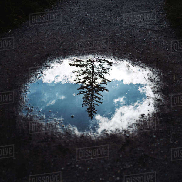 Reflection of a tree in puddle Royalty-free stock photo