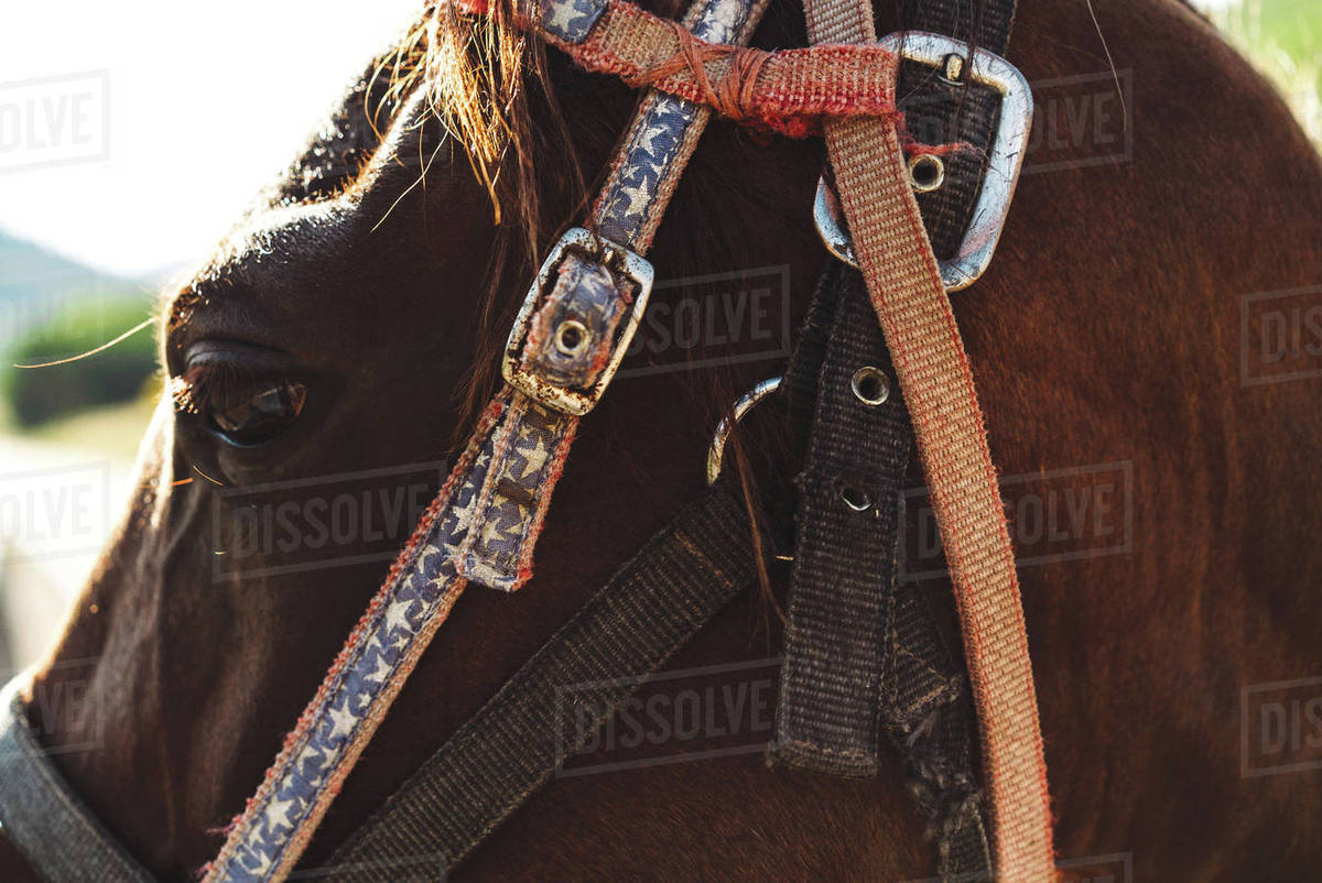 Close up of horse wearing headstall and halter Royalty-free stock photo