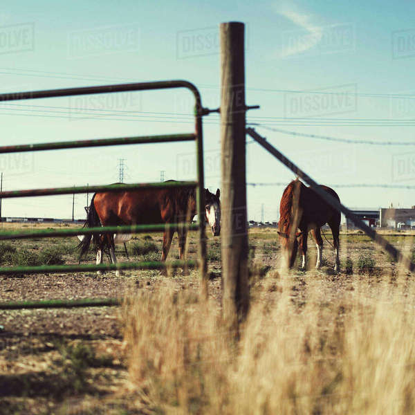 Two horses on ranch through fence Royalty-free stock photo