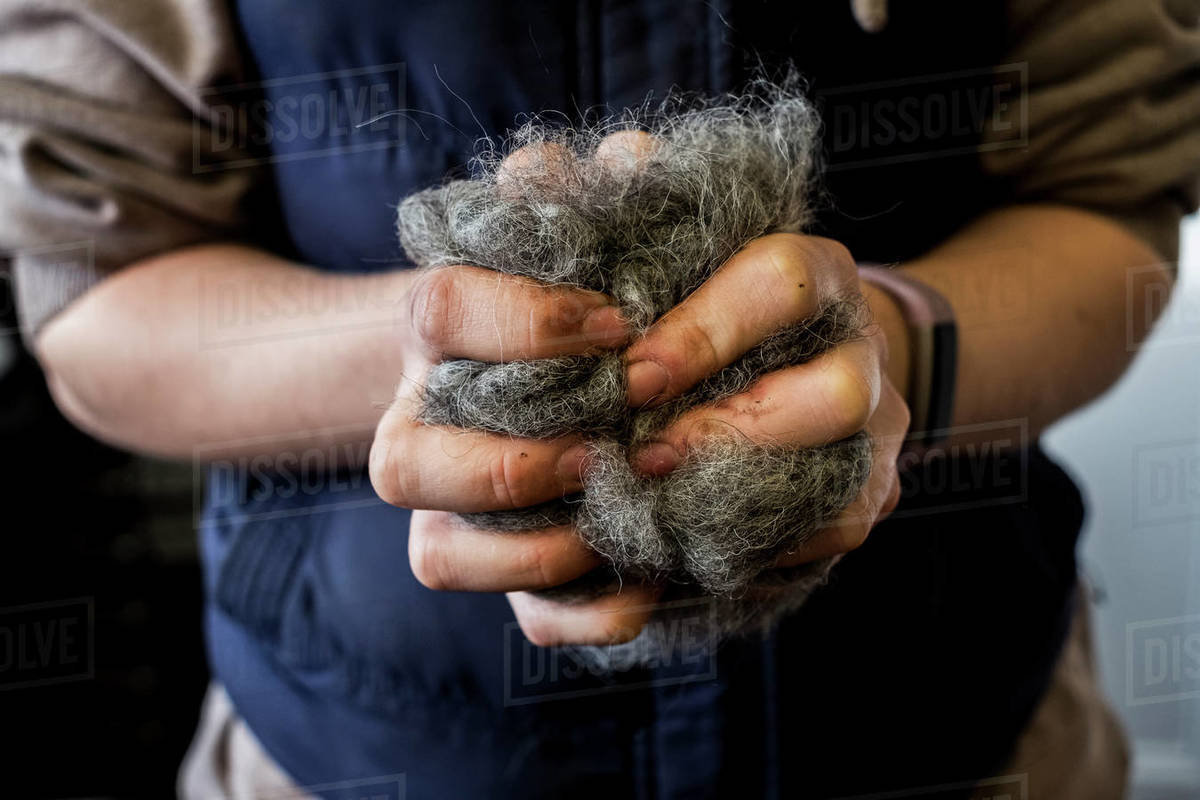 Close up of woman holding bunch of horse hair filling for saddle. Royalty-free stock photo