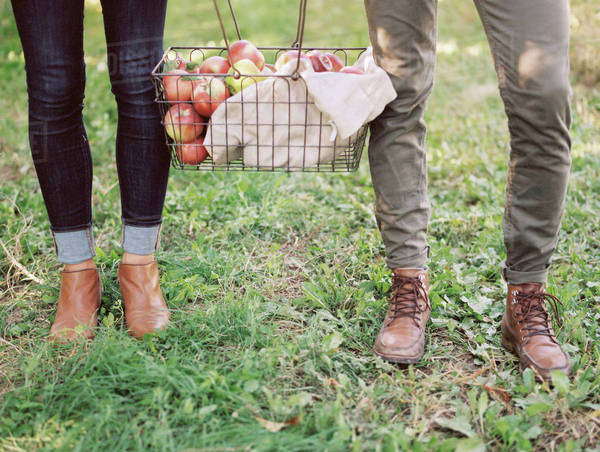 A couple carrying a basket of apples. An organic apple orchard. Royalty-free stock photo