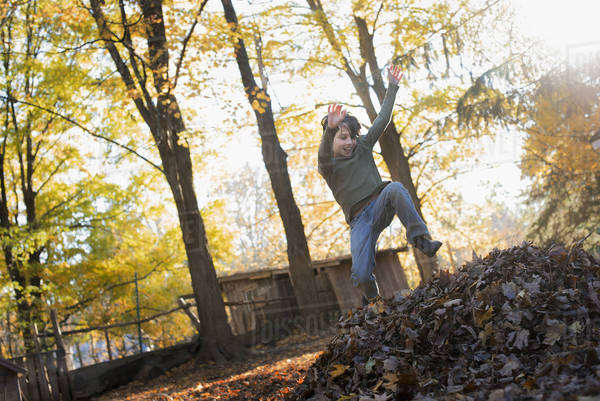 A child in autumn sunshine in a woodland. Leaping into a large pile of raked up autumn leaves.  Royalty-free stock photo