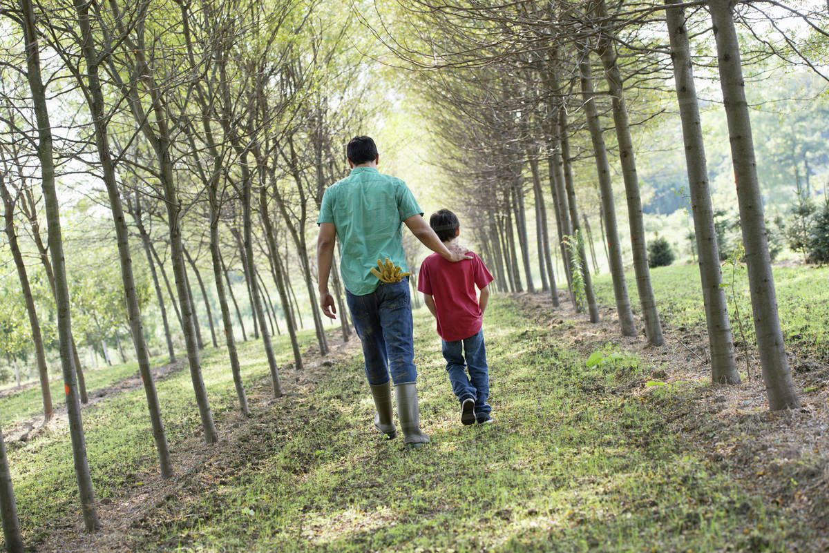A man and a young boy walking down an avenue of trees.  Royalty-free stock photo