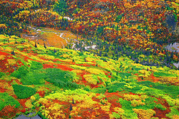 Fall colours, aerial view, Wrangell-St. Elias National Park, Alaska Rights-managed stock photo
