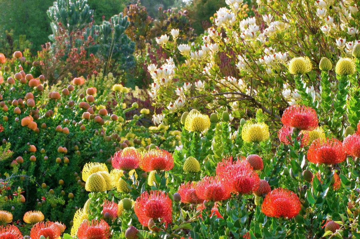 Mediterranean Plants Blooming Ucsc Arboretum Santa Cruz