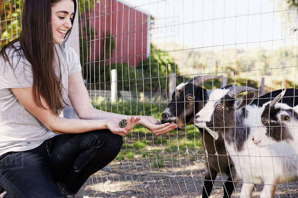 A young woman crouching down and feeding a pair of goats through a wire fence. Royalty-free stock photo
