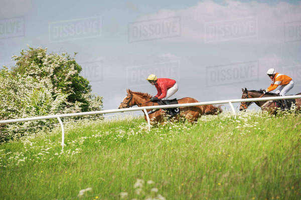 Two riders on racehorses during a steeplechase. Royalty-free stock photo