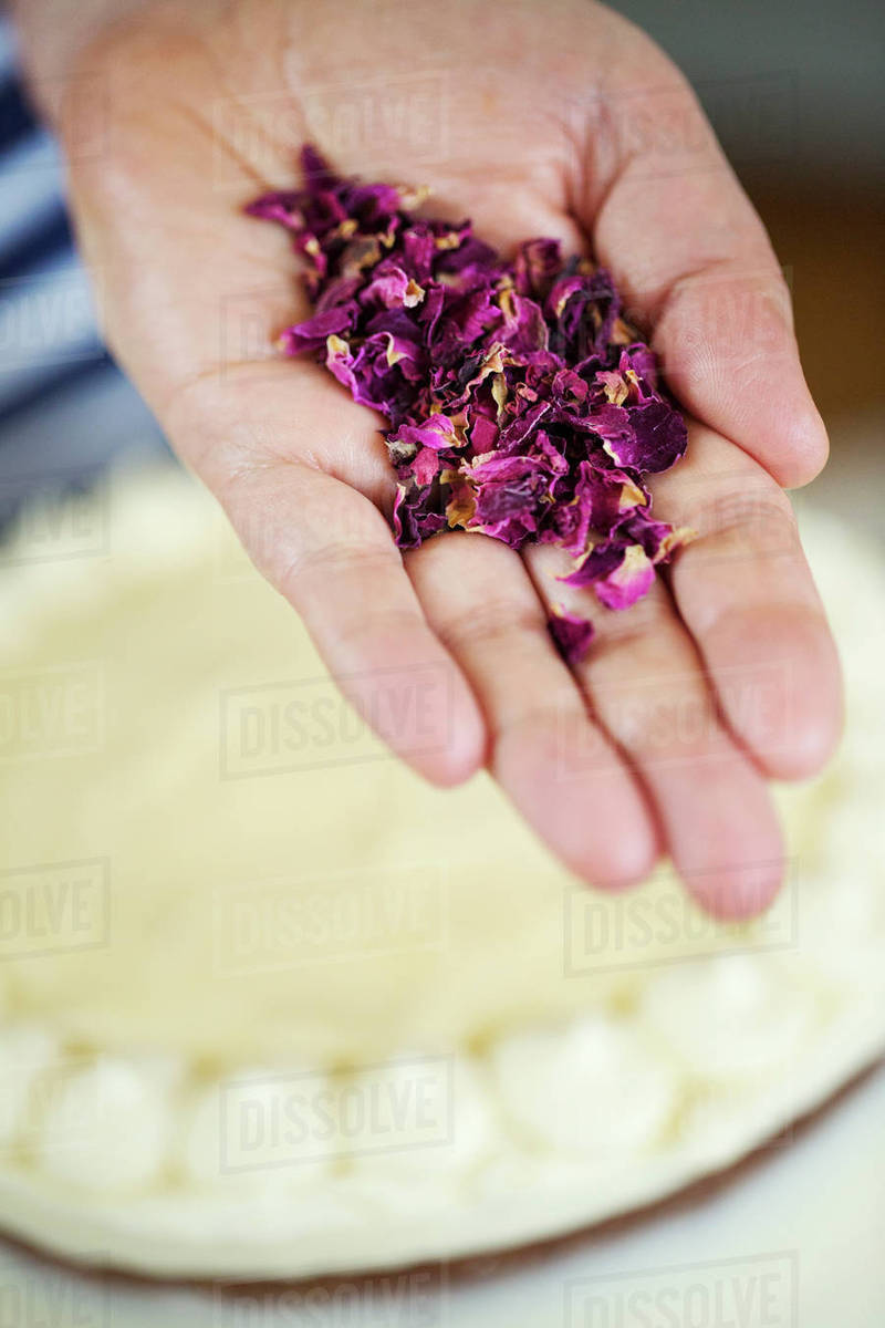 Close Up High Angle View Of Hand Holding Dried Purple Flower Petals