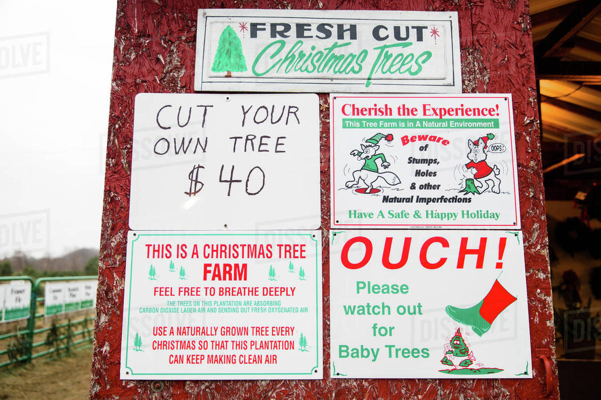 Fresh Cut Christmas Trees Sign.Sign In The Shape Of A Christmas Tree At A Christmas Tree Farm Stock Photo