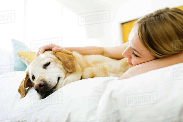 Young woman  stroking golden retriever in bed Royalty-free stock photo