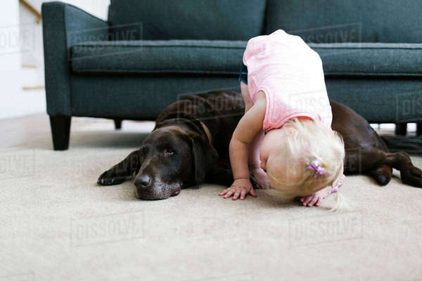 Small girl (2-3) playing with dog in living room Royalty-free stock photo