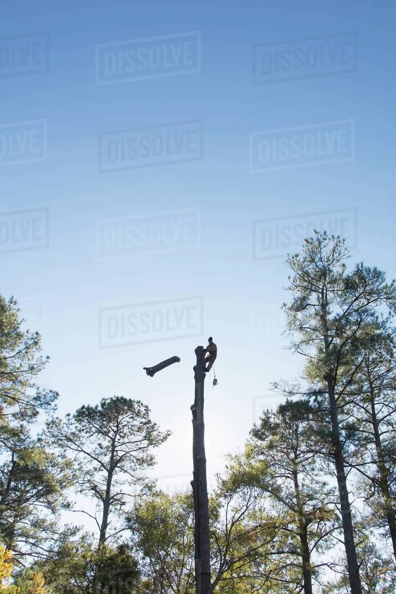 Usa North Carolina Silhouette Of Man Cutting Down Tree