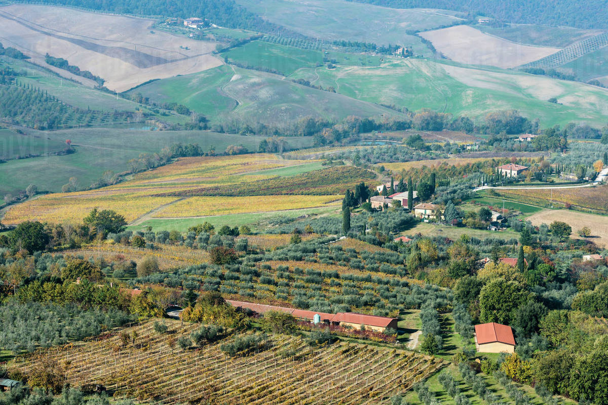 Italy, Tuscany, Montepulciano, landscape with vineyard fields, rows of  olive trees, buildings and cypress alleys stock photo