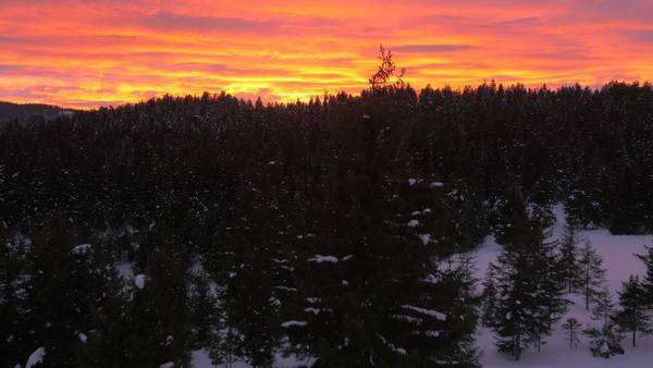 Aerial - Fiery sunset over winter forest Christmas with tree light up on a field Royalty-free stock video