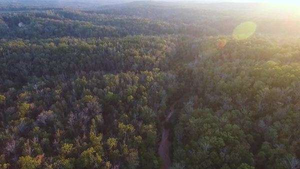 Aerial shot of canyon and trees at sunset Royalty-free stock video