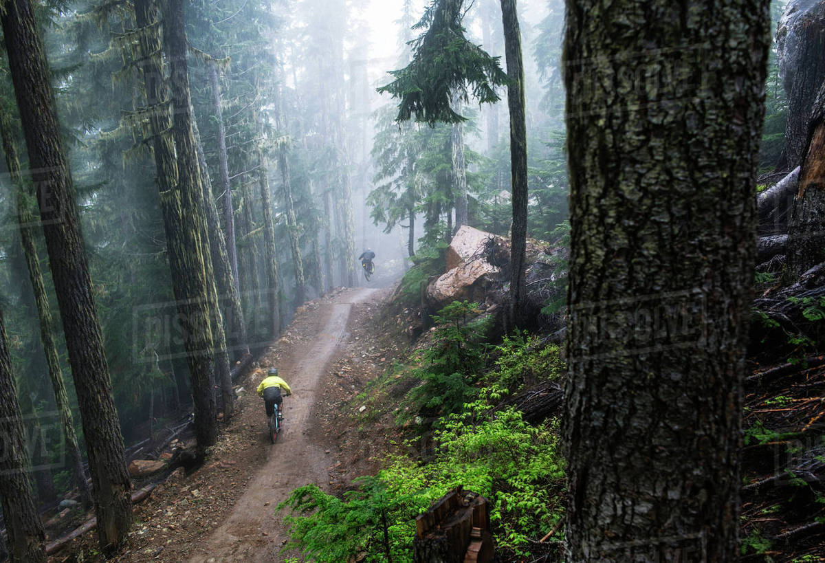High angle view of male friends mountain biking in forest Royalty-free stock photo