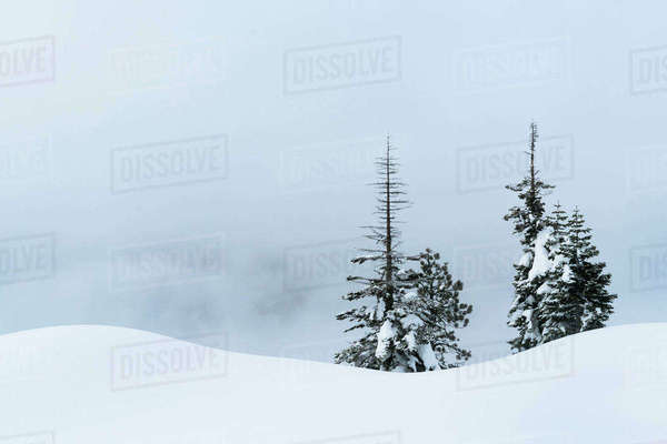 Trees on snow covered field against cloudy sky at Yosemite National Park Royalty-free stock photo