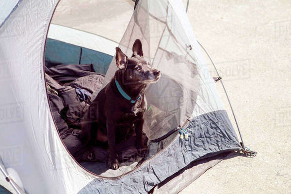 High angle view of dog looking away while sitting in tent during sunny day Royalty-free stock photo