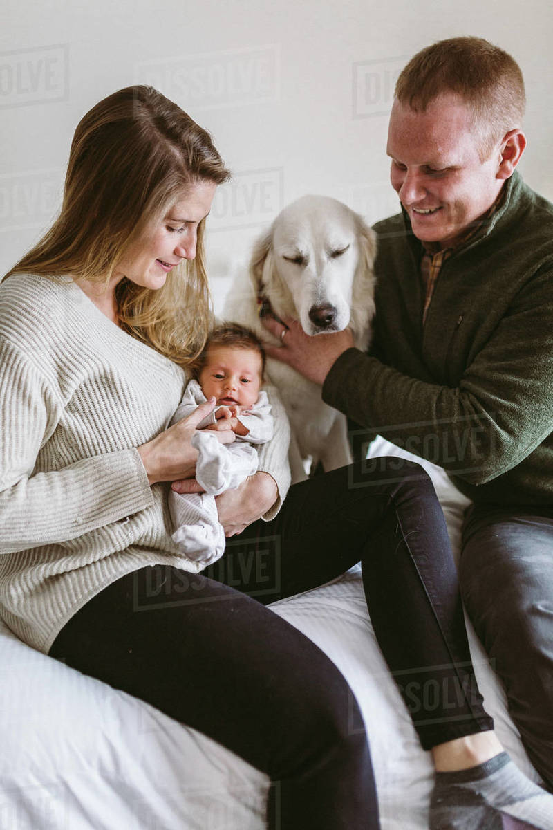 Pet White Lab Looks On While Mom And Dad Hold Newborn Baby Girl Stock Photo Dissolve