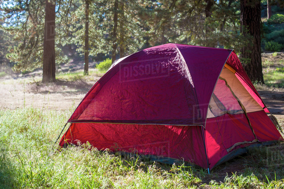 Tent on grassy field against trees Royalty-free stock photo