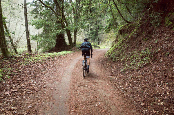 Rear view of man cycling in forest Royalty-free stock photo