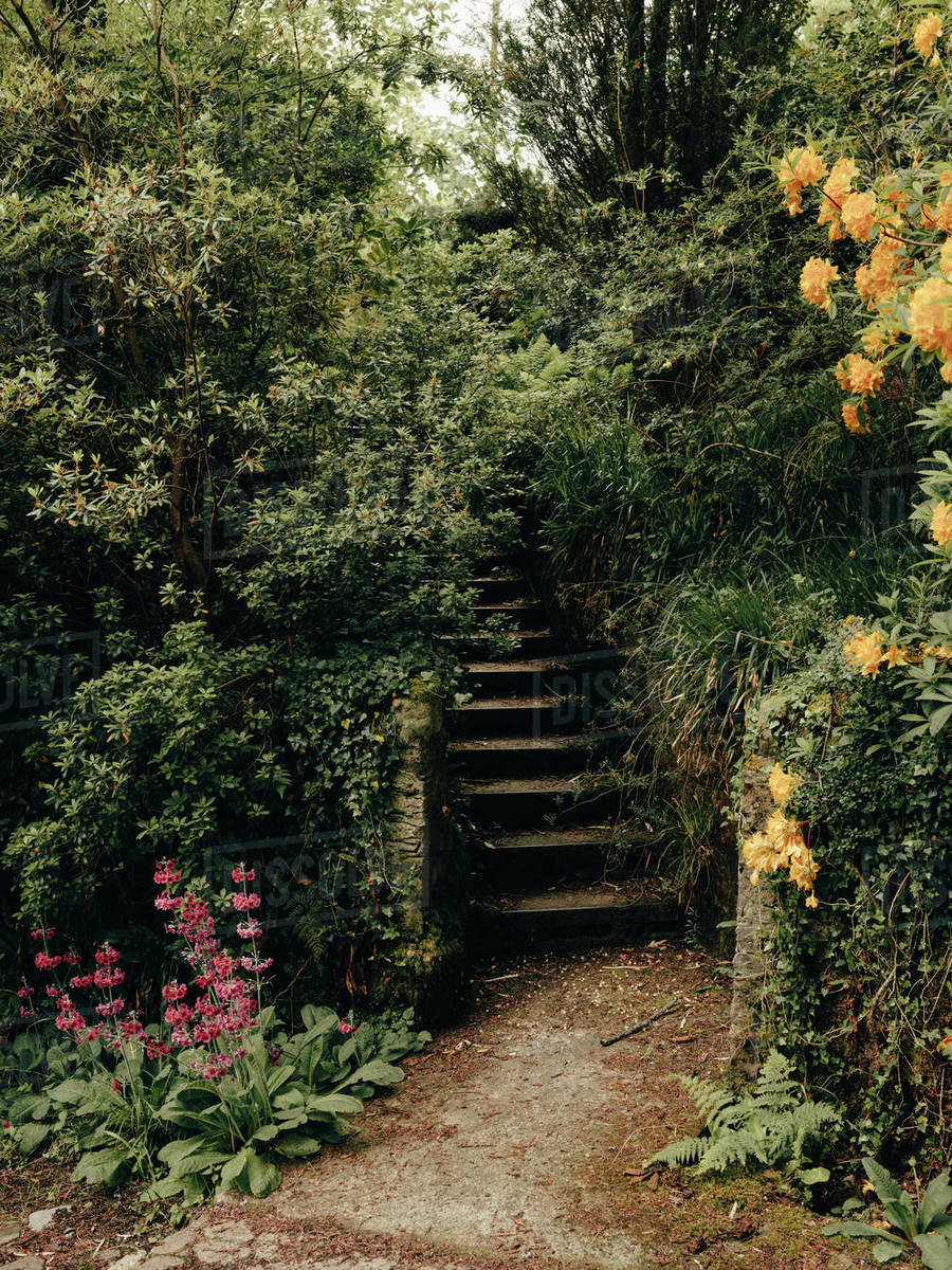 Steps at Linn Botanic Gardens Royalty-free stock photo