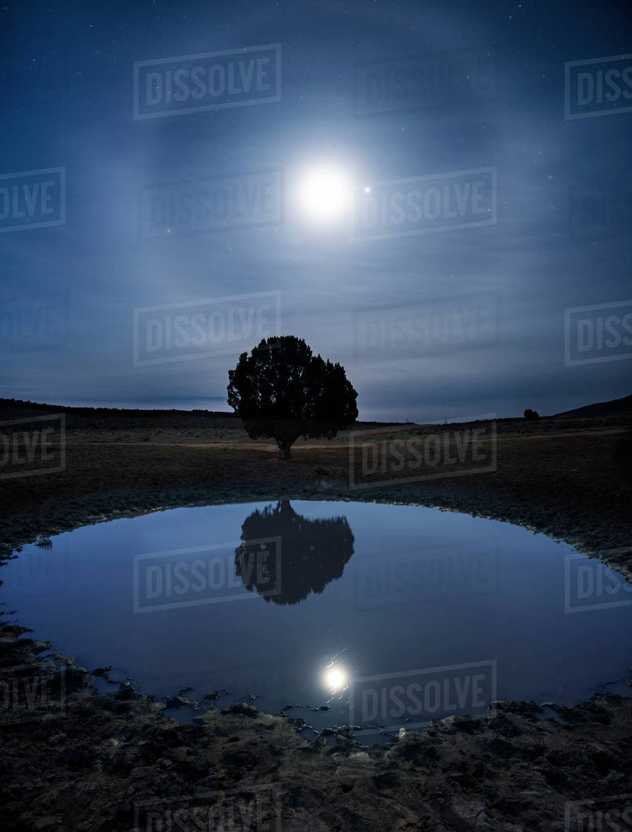Moon Dog Rising Over A Lone Tree Reflecting in a Cattle Pond Royalty-free stock photo