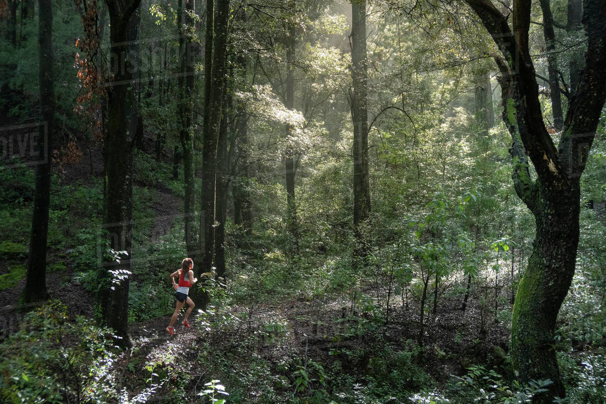 One woman running on a trail in a dense forest with high trees Royalty-free stock photo