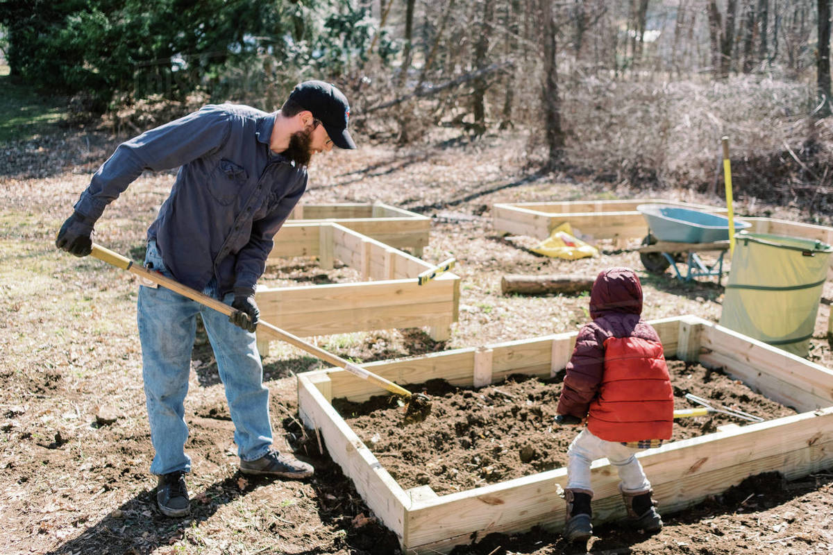 A father and son preparing raised garden beds in early spring. Royalty-free stock photo