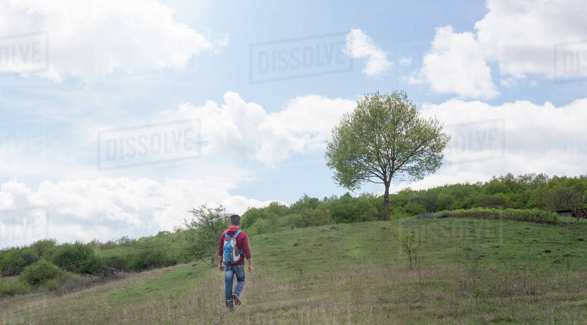 Adult man traveling on hills with green trees Royalty-free stock photo