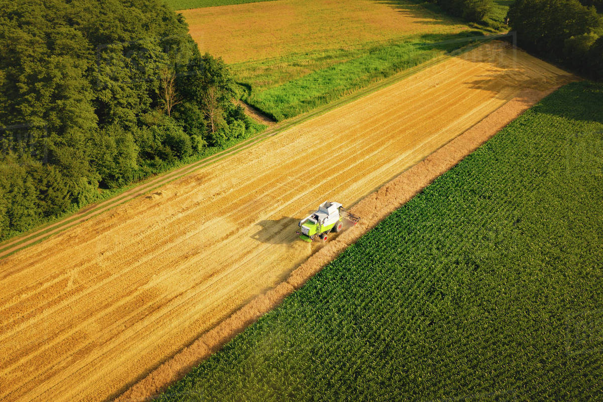 A modern combine harvester working on wheat field, aerial view Royalty-free stock photo