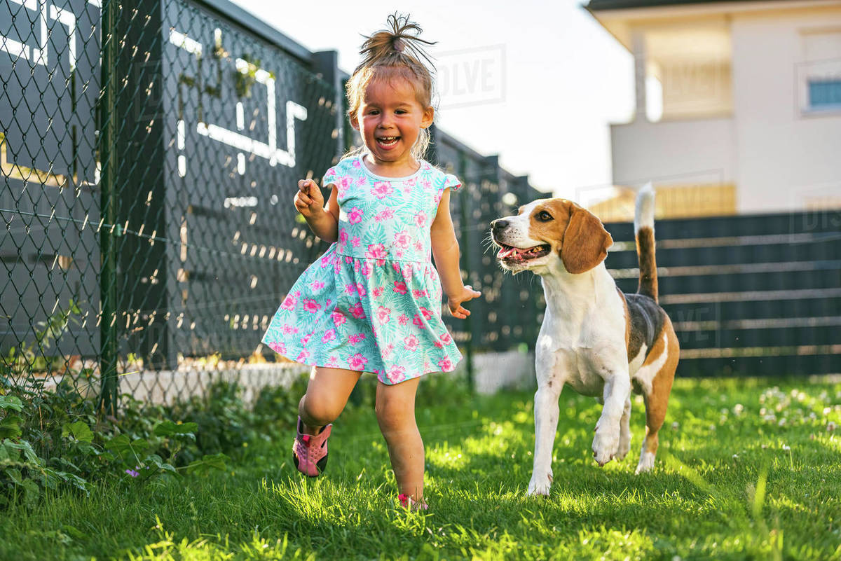 Baby girl running with beagle dog in backyard in summer day. Domestic animal with children concept. Royalty-free stock photo