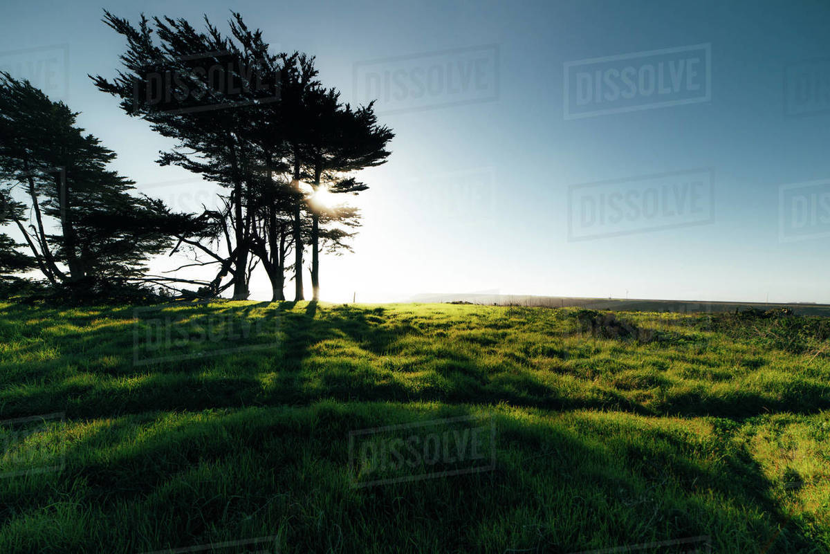 Tree and green grass along ocean silhouetted by sun Royalty-free stock photo