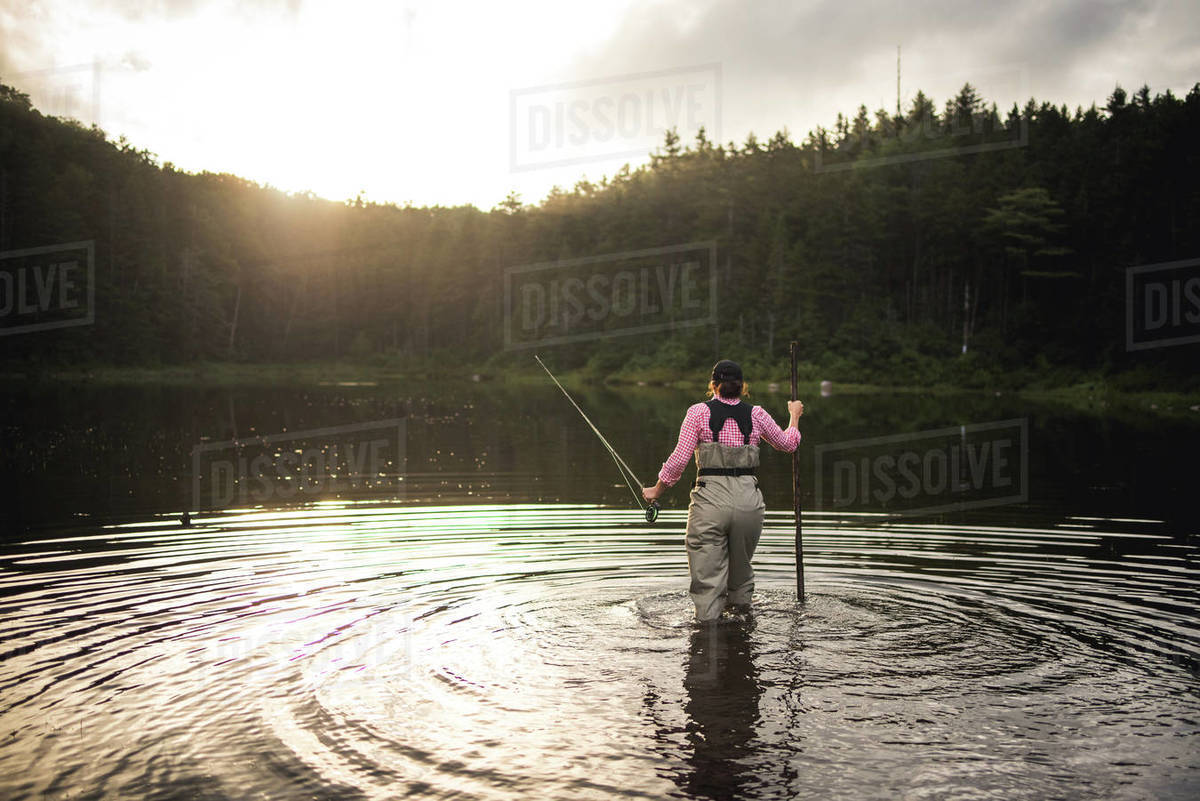 Woman angler wading in NH backcountry lake with back-lighting Royalty-free stock photo