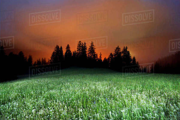 Scenic view of grassy field against cloudy sky Royalty-free stock photo