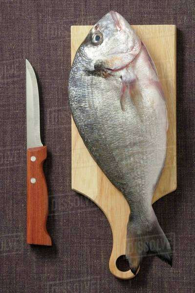 Seabream on a wooden board next to a knife Royalty-free stock photo