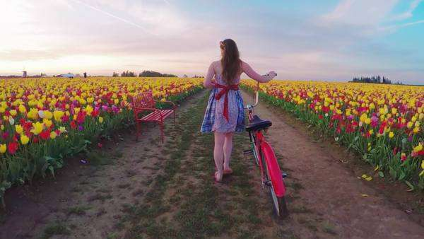 Camera pans from low to high angle and follows young girl as she walks a vintage bike through fields of tulip flowers in bloom Royalty-free stock video