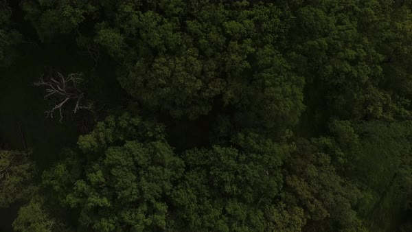 Top view shot of a forest in California Royalty-free stock video