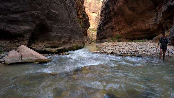 Woman hiking in water through the Zion Narrows looking down the canyon of red rock. Royalty-free stock video