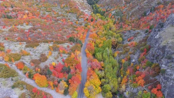 View of canyon in Fall flying backwards over road winding through forest in Utah. Royalty-free stock video