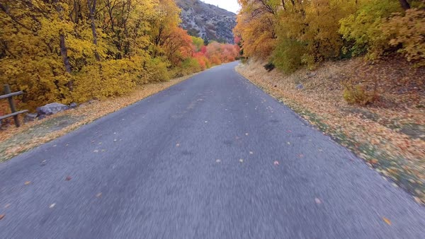 Flying low above roadway and rising above colorful forest during Autumn in Utah. Royalty-free stock video