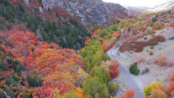 Aerial view flying backwards over colorful forest in Autumn. Royalty-free stock video
