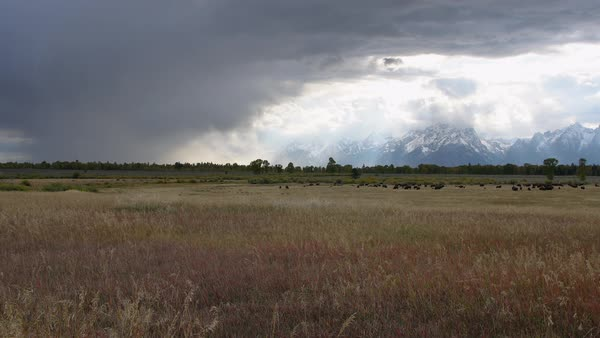 View of storm moving through the sky over landscape past heard of Bison in Wyoming. Royalty-free stock video