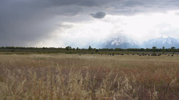View of storm moving through the sky over landscape past heard of Bison. Royalty-free stock video