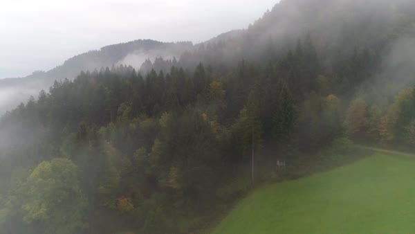 Flying through low lying fog and up over a pine tree forest in Skofja Loka viewing the mountainside in Slovenia. Royalty-free stock video