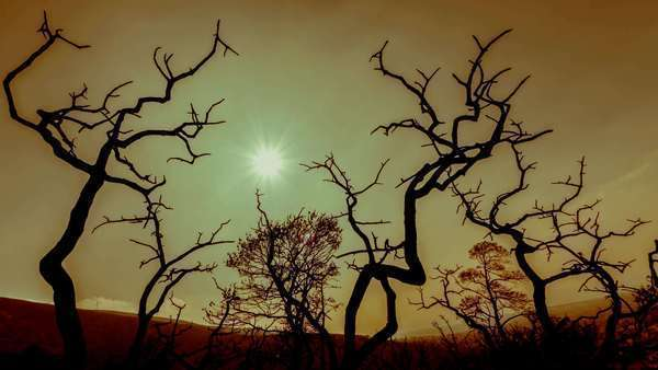 Apocalyptic scenery burned out trees, polluted sky and sun background Royalty-free stock video
